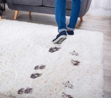قالیشویی درخشان در قم